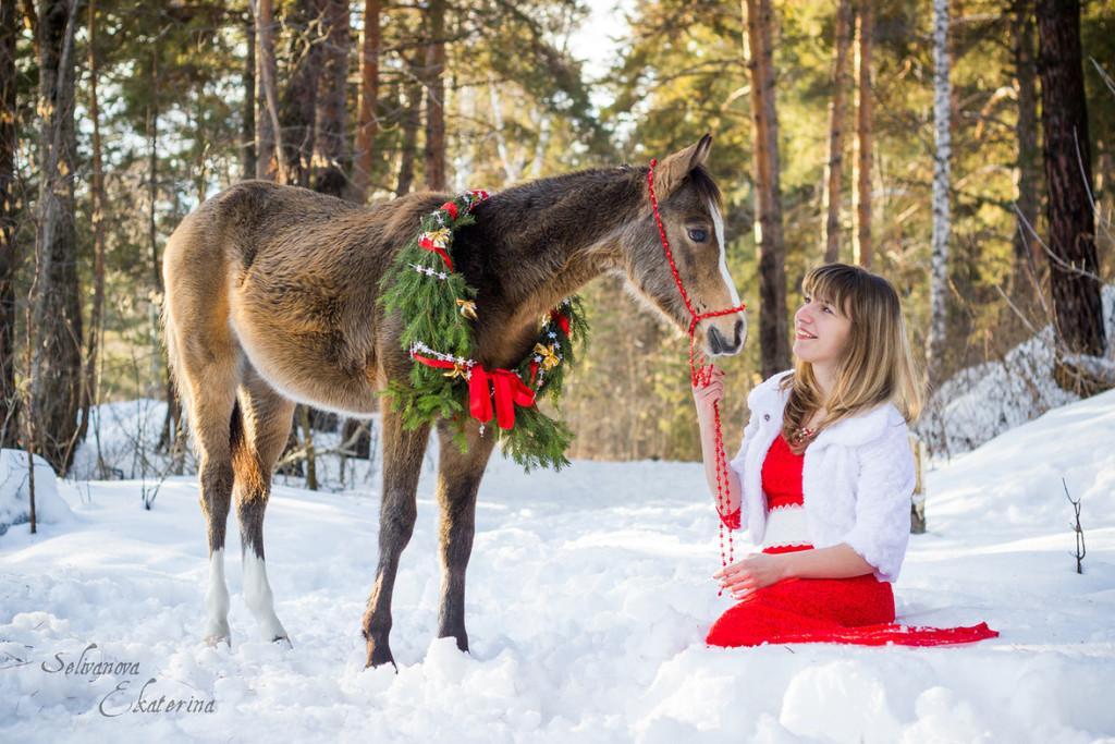 фотосессия с уэльским пони лошадью новосибирск