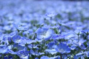 oboлён цветы